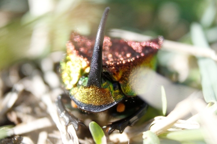 rainbow scarab 3