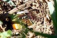 rainbow scarab 5